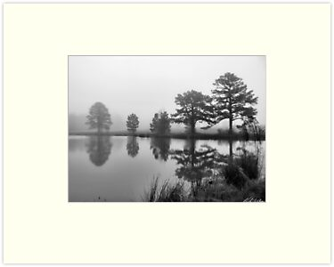 Foggy Pond by Kyle Wilson