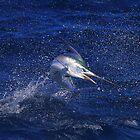 Marlin Canvas or Print - Juvenile Black Marlin by blackmarlinblog