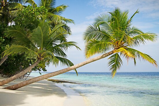 island paradise by Brooke Reynolds