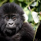 Baby mountain gorilla by monsieurI