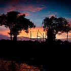 Trees during sunset in Cambodia by tpfeller