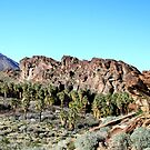 Indian Canyon-Palm Springs by Rosalee Lustig