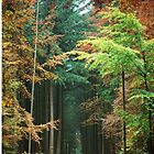 IntotheForest_iphonecase by alla521