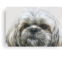 A Shaggy Dog Canvas Print