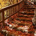 Autumn Leaves Stairs by kianhwee