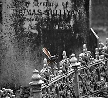Cemetery Wren by claireh