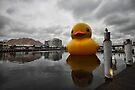 Big Duck in the City by yolanda