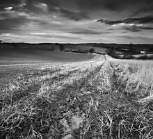 Nightlite, Meander in the Mud BW by Andy F