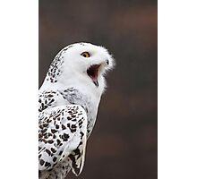 Snowy Owl Attitude ~ Photographic Print