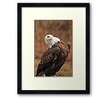 """""""What Are YOU Lookin' At ? """" Framed Print"""