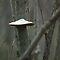Shelf Fungus Behind Strong Diagonal by Deb Fedeler