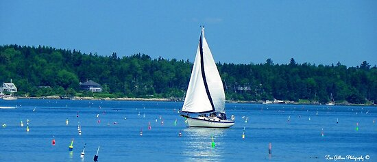 Good Sailing! by Lisa Gilliam Photography