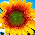 Sunny Daze by Paul Gitto