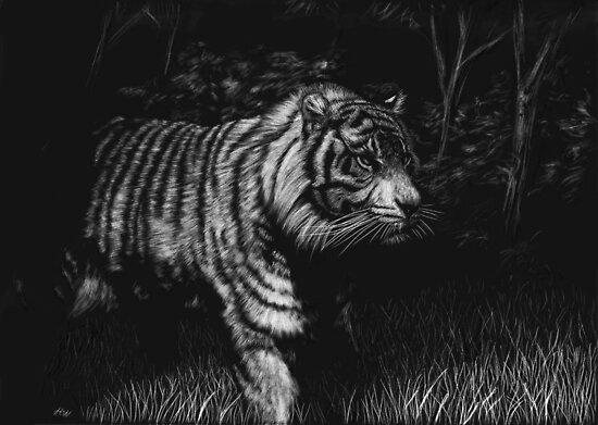 Out of the Jungle - tiger by Heather Ward