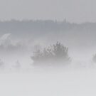 Foggy winter day! by Jeannine St-Amour
