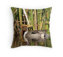 Northern Pintail (Male) Throw Pillow