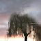Weeping Willow by KUJO-Photo