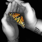 Butterfly Scanography by emily fields