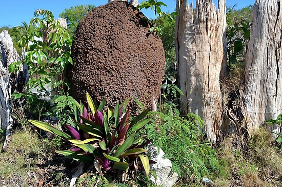 Termite Nest in Nassau, The Bahamas by 242Digital