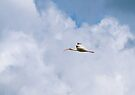 Ibis In The Clouds by Dawne Dunton