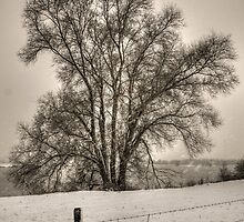winter scene IV by Nicole W.