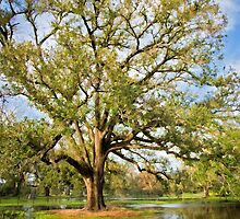 Oak in Orleans by Bonnie T.  Barry