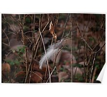 Lonely Feather Poster
