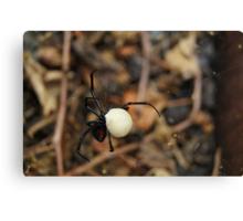 Black Widow Spider Mother Canvas Print