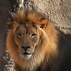Lions head by bobkeenan