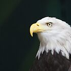 Eagle head Pensive by bobkeenan
