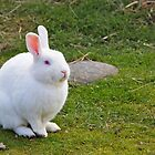 White Bunny by bobkeenan