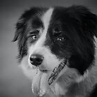 Desiree the Wonder Dog by AngelaHumphries