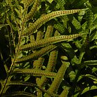 Tropical Fern by satsumagirl