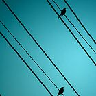 birds on a wire... by geisha