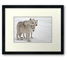 ..always on alert.....  Framed Print