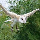 Gibbon owl by Felfriast