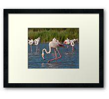 Group of Flamingo's Framed Print