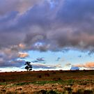 lone tree by mrobertson7