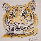 Tiger - Head Study by Colin Shepherd