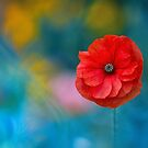 A Touch of Poppy Magic by Sarah-fiona Helme