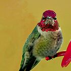 ANNA&quot;S HUMMINGBIRD by RoseMarie747