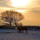 Ponies in Winter by Andrew Pounder
