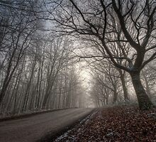 Misty Road by cameraimagery