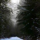 A walk among the still by Jean Poulton