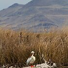 Pelican Perched by utahwildscapes