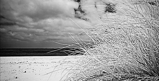 Grass by Pene Stevens