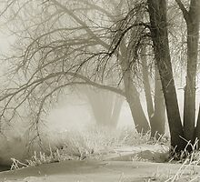Winter Silence by Greg Summers