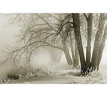 Winter Silence Photographic Print