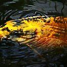 A Bit Fishy by Yampimon