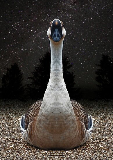 The Gander and a Starry Night by Yampimon